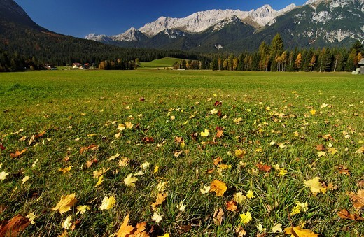Stock Photo: 1848R-337358 Autumn foliage on a meadow field in Leutasch valley near Seefeld Tyrol Austria