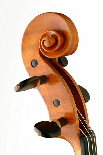Violin scroll and tuning pegs in pegbox : Stock Photo