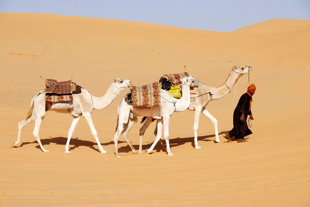 Stock Photo: 1848R-343887 Tuareg walks with camels through the desert Mandara Libya