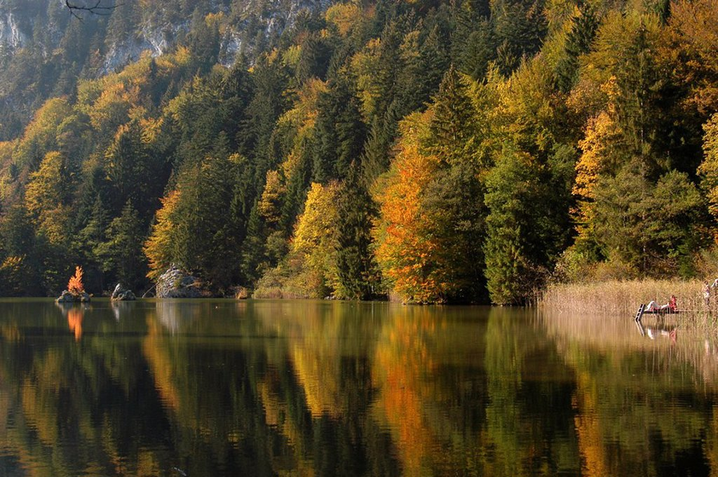 Little tarn in autumn forest, Austria : Stock Photo
