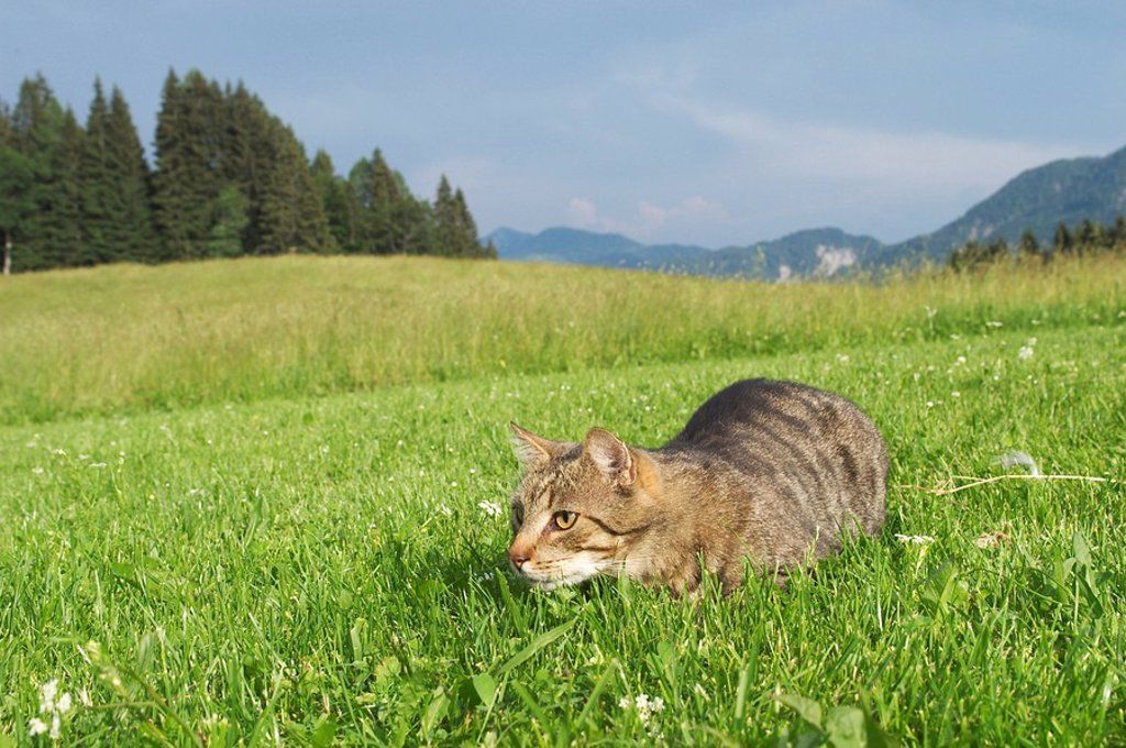Cat in the gras : Stock Photo