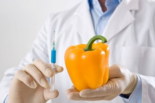 Man in a laboratory injecting liquid into a yellow pepper : Stock Photo
