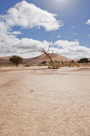 Pan of the Sossusvlei in the Namib Desert, Namibia, Africa : Stock Photo