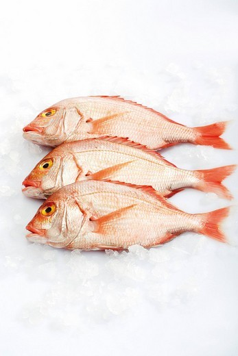 Three pink Gilt-head Sea Breams Sparus aurata on crushed ice : Stock Photo
