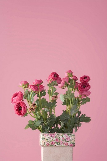 Stock Photo: 1848R-357768 Artificial flowers in a vase, pink backdrop