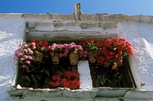 Stock Photo: 1848R-357819 Pampaneira, Sierra Nevada, Alpujarra, Alpujarras, Andalusia, Granada, Spain