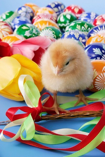 Easter setting with chick : Stock Photo