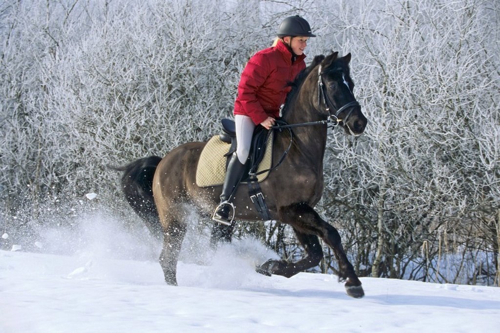 Young rider on back of German pony galloping in winter : Stock Photo