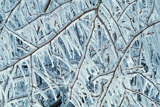 Twigs of an appple tree encased in ice and with hanging icicles : Stock Photo