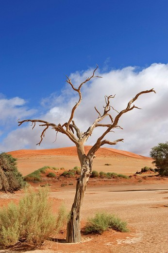 Sossusvlei in the Namib Desert, Namibia, Africa : Stock Photo