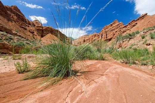 Stock Photo: 1848R-363471 Konorchek Canyon, Tian Shan, Kyrgyzstan