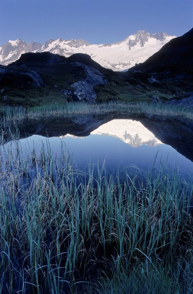 Stock Photo: 1848R-366297 Reeds and high blades of grass in front of Lake Schwarzsee, Zillertal Alps, Tyrol, Austria, Europe