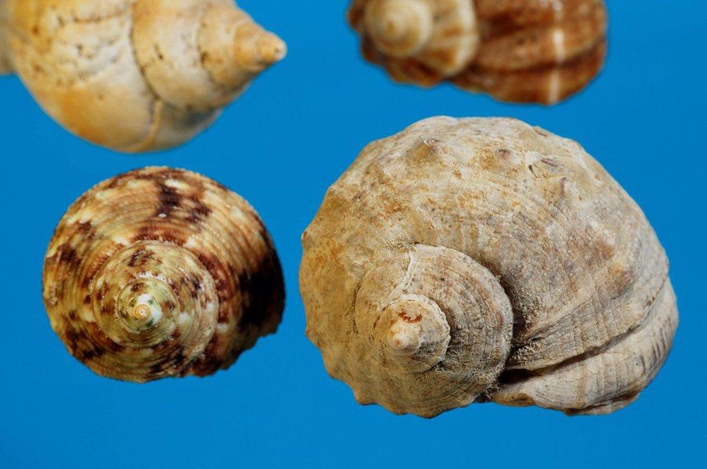 Snail shell : Stock Photo