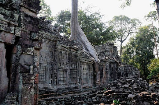 Stock Photo: 1848R-370317 Jungle overgrowing Preah Khan Temple, Cambodia, Southeast Asia