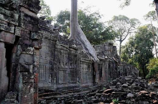 Jungle overgrowing Preah Khan Temple, Cambodia, Southeast Asia : Stock Photo