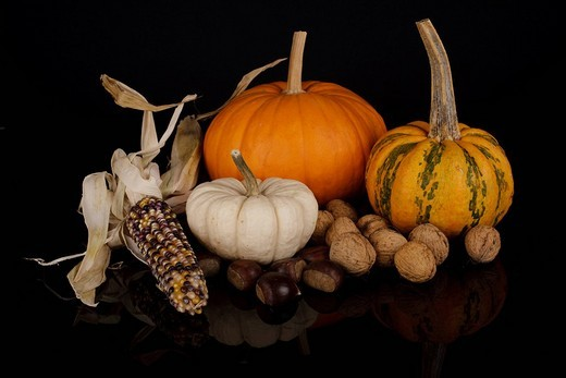 Stock Photo: 1848R-370555 Still life with cucurbita pepo, edible pumpkins, maize and nuts on black background