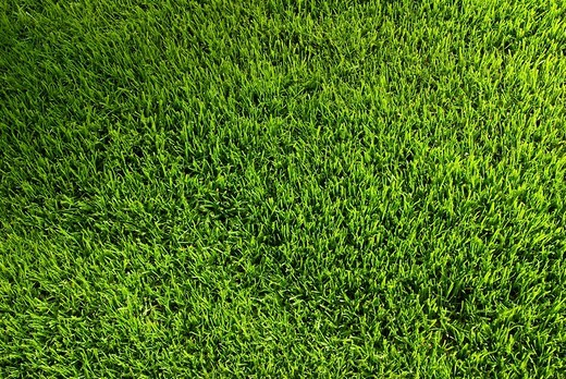 Lawn : Stock Photo