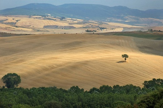 Hilly landscape in front of Monte Amiata, Crete, Tuscany, Italy : Stock Photo