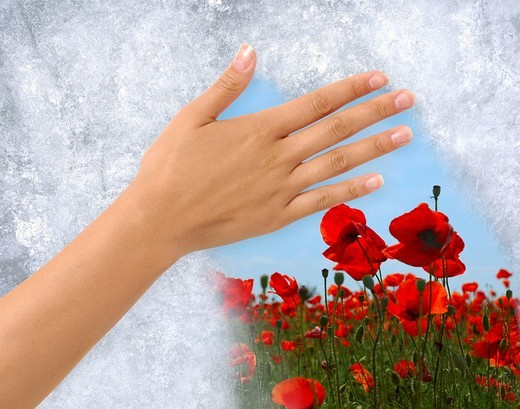 Conceptual photo-illustration of ice being removed from a frozen window by a female hand showing blooming vivid summer field of poppies : Stock Photo