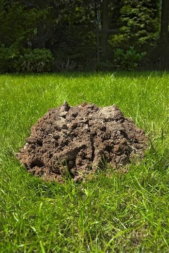 Molehill in a garden : Stock Photo