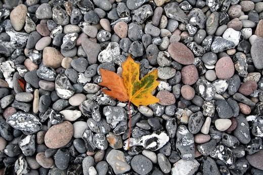 Stock Photo: 1848R-381665 Leaf on the beach