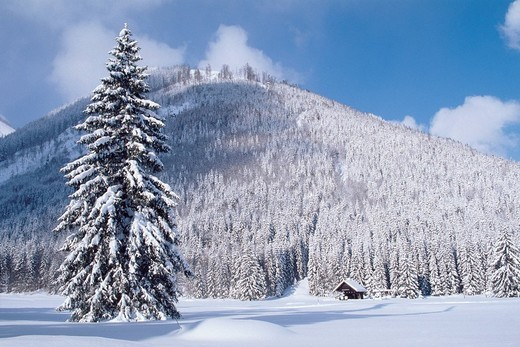 Stock Photo: 1848R-381683 Winter landscape in Gramai, North Tyrol, Austria, Europe