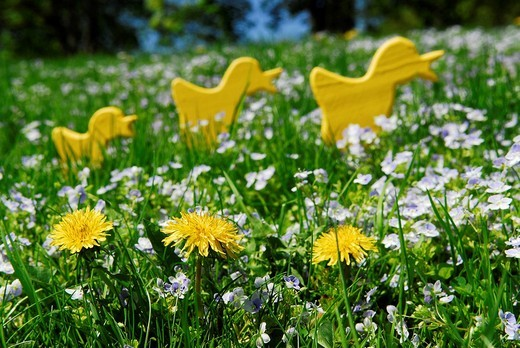 Stock Photo: 1848R-388804 Easter decoration with chicks on a flower meadow