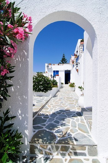 Pink Oleander at the entrance to a block of apartments with paving stones, Naoussa, Paros, Cyclades, Greece, Europe : Stock Photo