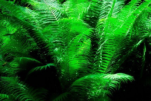 Fern forest : Stock Photo