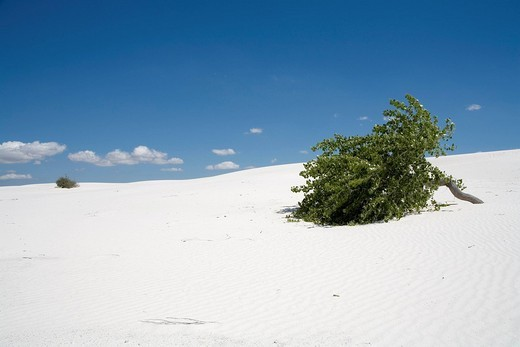 Stock Photo: 1848R-396758 White Sands National Monument, Chihuahua-Wüste, New Mexico, USA