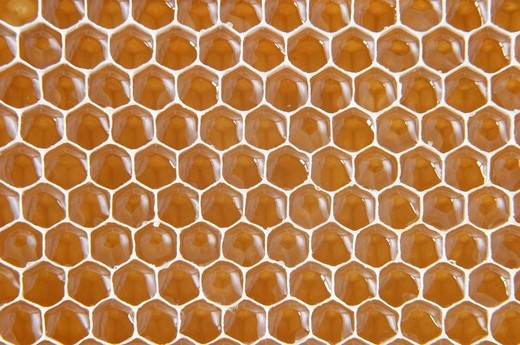 Honeycomb : Stock Photo