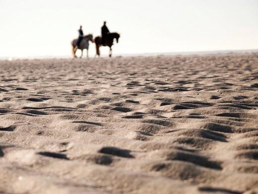 Horses on the beach, Langeoog Island, East Friesland, Lower Saxony, Germany, Europe : Stock Photo