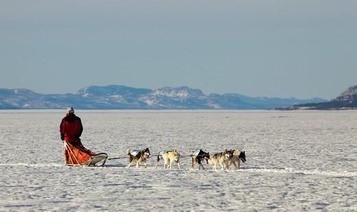 Stock Photo: 1848R-502980 Man, musher running, driving a dog sled, team of sled dogs, Alaskan Huskies, mountains behind, frozen Lake Laberge, Yukon Territory, Canada