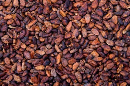 Cocoa beans, La Maison du Cacao, Pointe_Noire, west coast of Basse_Terre, Guadeloupe, French Antilles, Lesser Antilles, Caribbean : Stock Photo