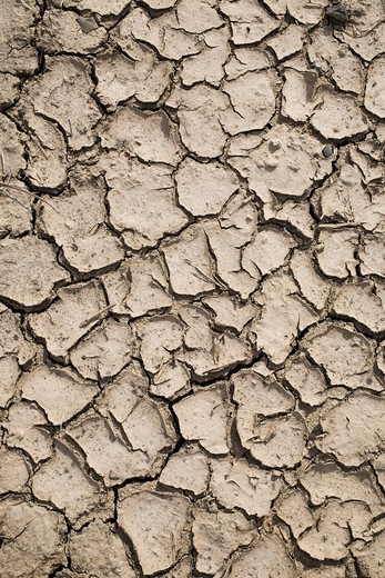 Stock Photo: 1848R-503699 Parched earth