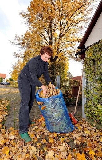 Women collecting autumn leaves : Stock Photo