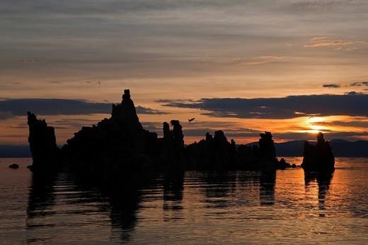 Tufa sculptures with Ospreys at sunrise, South Tufa Area, State Natural Reserve, Mono Lake, California, USA : Stock Photo