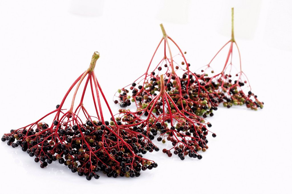 Elderberries Sambucus : Stock Photo