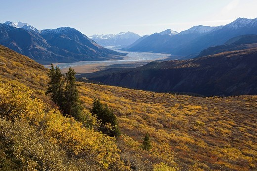 Stock Photo: 1848R-506274 Indian summer, leaves in fall colours, view from Sheep Mountain into Slim´s River Valley, Kaskawulsh Glacier, St. Elias Mountains, Kluane National Park and Reserve, Yukon Territory, Canada