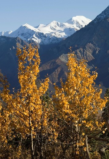Stock Photo: 1848R-506277 Indian summer, leaves in fall colours, view from Sheep Mountain into Slim´s River Valley, Kaskawulsh Glacier, St. Elias Mountains, Kluane National Park and Reserve, Yukon Territory, Canada