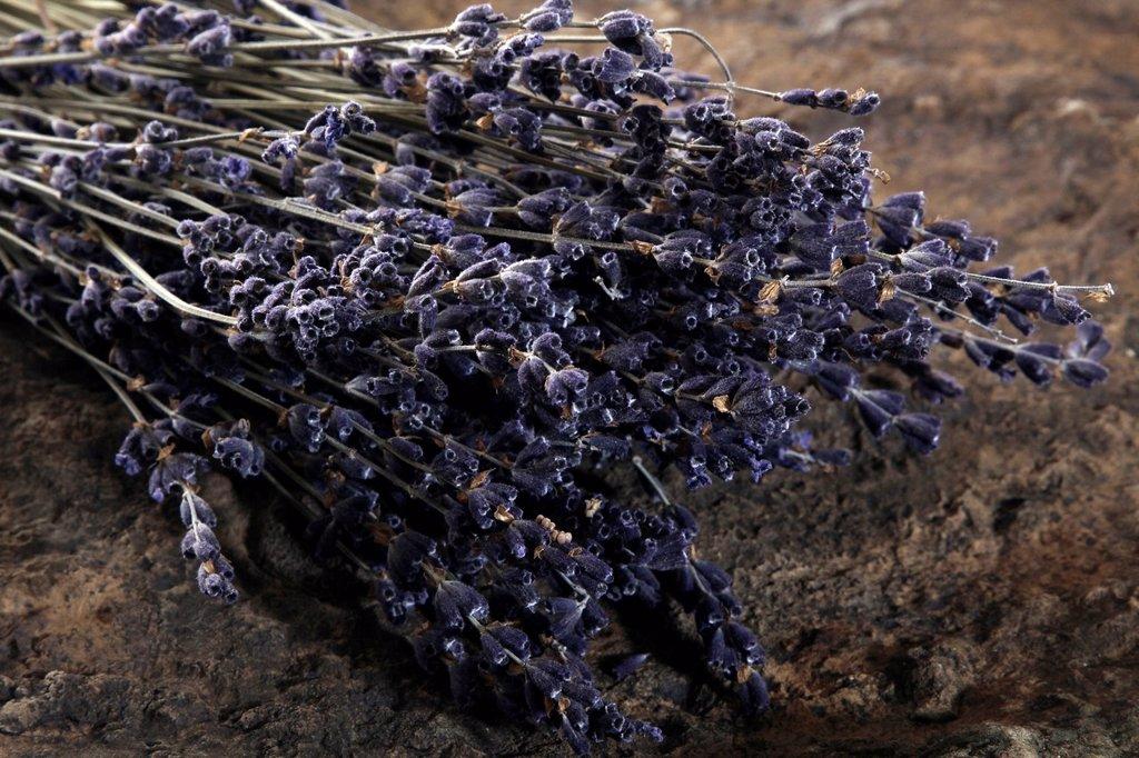 Stock Photo: 1848R-508494 Lavender Lavandula angustifolia on a slab