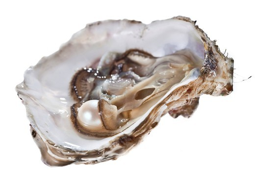 Stock Photo: 1848R-509459 Opened oyster with pearl