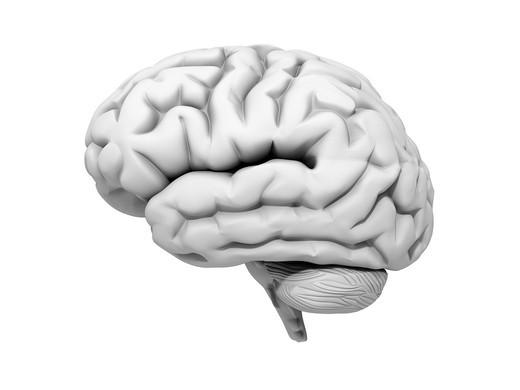 Stock Photo: 1848R-512975 Human brain, 3D Illustration