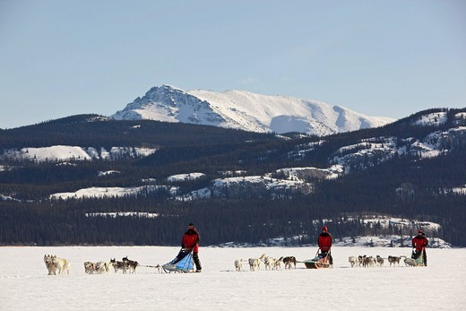 Three men, mushers running, driving a dog sled, team of sled dogs, Alaskan Huskies, mountains behind, frozen Lake Laberge, Yukon Territory, Canada : Stock Photo
