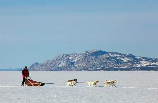 Stock Photo: 1848R-513752 Man, musher running, driving a dog sled, team of sled dogs, Alaskan Huskies, mountains behind, frozen Lake Laberge, Yukon Territory, Canada