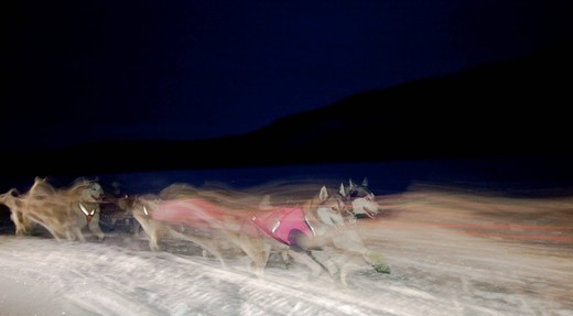 Dog musher Mike Ellis leaving Dawson City with his team of Siberian Huskies over the frozen Yukon River, Yukon Quest 1, 000_mile International Sled Dog Race 2010, Yukon Territory, Canada : Stock Photo