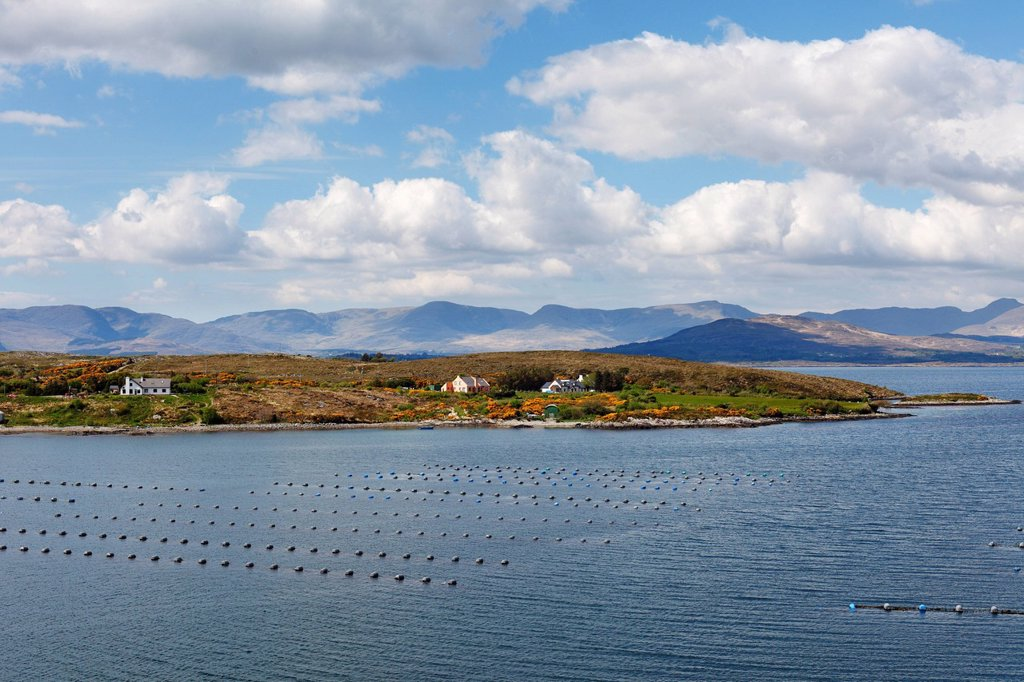 Stock Photo: 1848R-515337 Kilmakilloge Harbour, shellfish farming, Beara Peninsula, County Kerry, Ireland, British Isles, Europe