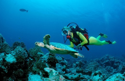 Stock Photo: 1848R-516104 Hawksbill Turtle Eretmochelys imbricata and a scuba diver, Maldive Islands, Indian Ocean