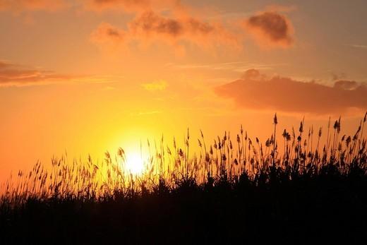 Stock Photo: 1848R-517024 Sun setting behind sugarcane plants at Beau_Bassin, Mauritius, Africa