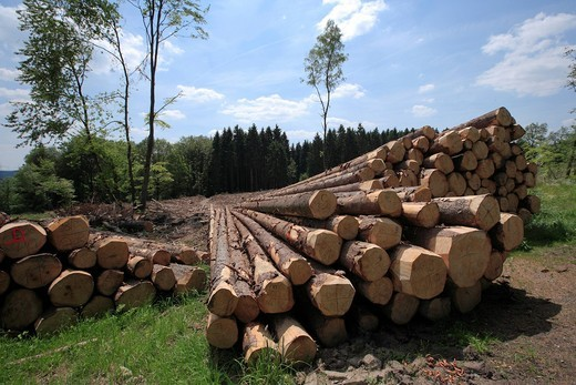 Timber harvesting, timber, spruces lying on the road, cleared area behind, Wipperfuerth, North Rhine_Westphalia, Germany, Europe : Stock Photo